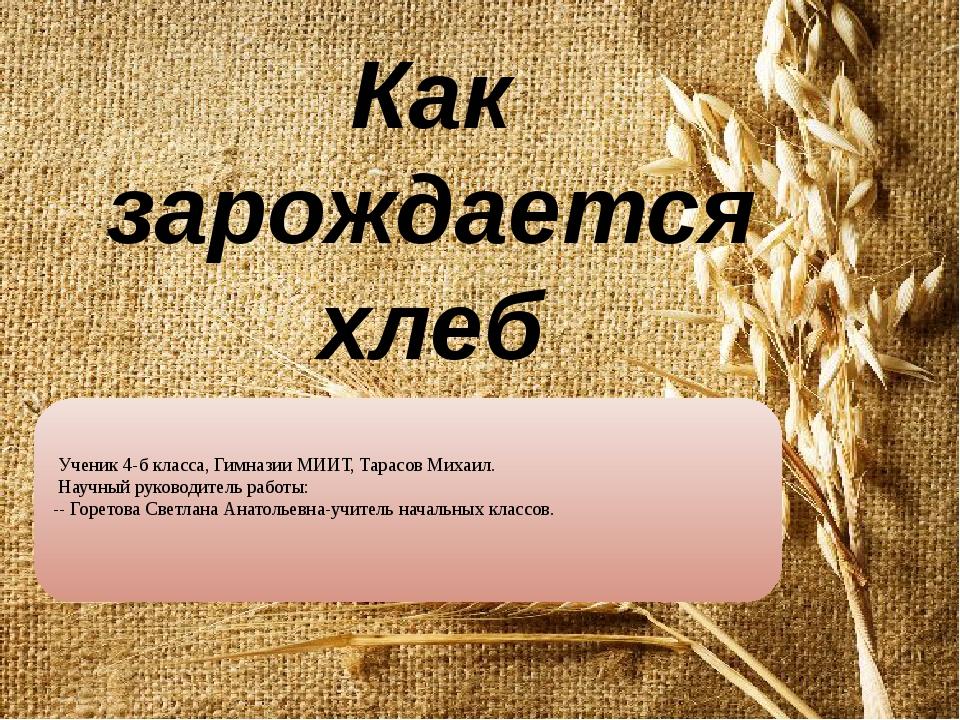 Как зарождается хлеб Ученик 4-б класса, Гимназии МИИТ, Тарасов Михаил. Научны...