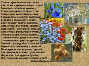 Словно травы шелестят слова. Как слова и травы в жизни схожи! Говорим «целебн