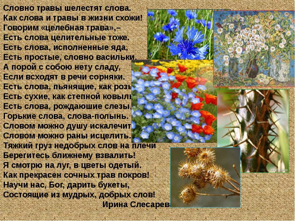 Словно травы шелестят слова. Как слова и травы в жизни схожи! Говорим «целебн...