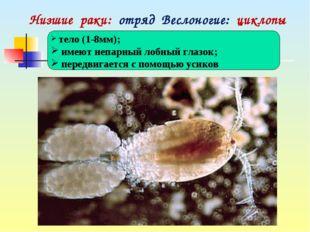 Низшие раки: отряд Веслоногие: циклопы тело (1-8мм); имеют непарный лобный г