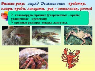 Высшие раки: отряд Десятиногие: креветки, омары, крабы, лангусты, рак – отше