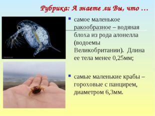 самое маленькое ракообразное – водяная блоха из рода алонелла (водоемы Велико