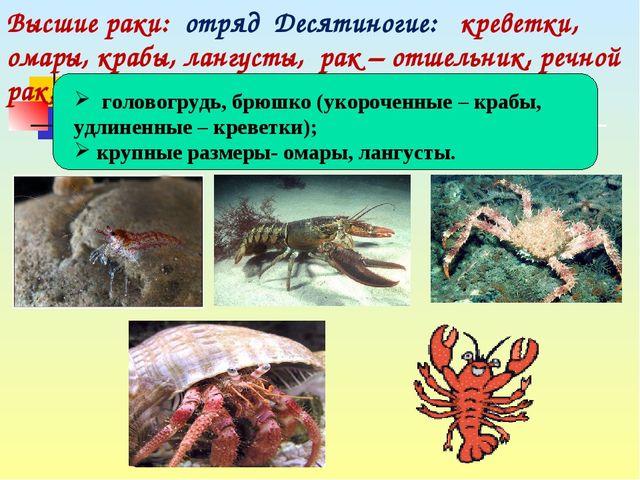 Высшие раки: отряд Десятиногие: креветки, омары, крабы, лангусты, рак – отше...