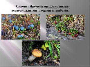 Склоны Иремеля щедро усыпаны всевозможными ягодами и грибами.