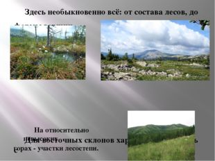 Здесь необыкновенно всё: от состава лесов, до  формы вершин.
