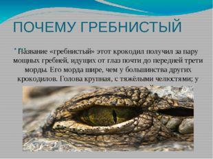 ПОЧЕМУ ГРЕБНИСТЫЙ … Название «гребнистый» этот крокодил получил за пару мощны