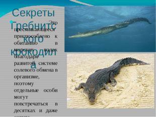 Секреты Гребнитского крокодила Это пресмыкающееся приспособлено к обитанию в