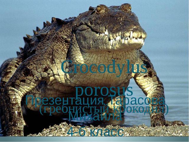 Crocodylus porosus (гребнистый крокодил) Презентация Тарасова Михаила 4-б класс
