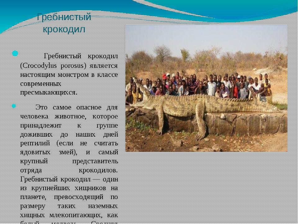 Гребнистый крокодил Гребнистый крокодил (Crocodylus porosus) является настоящ...