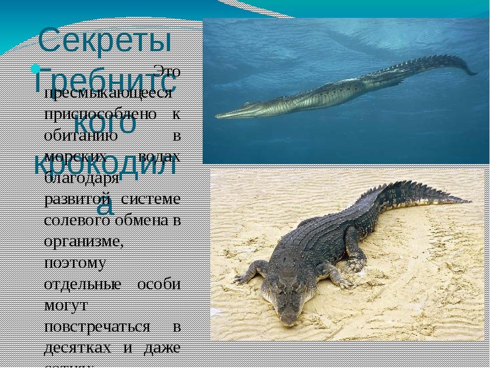 Секреты Гребнитского крокодила Это пресмыкающееся приспособлено к обитанию в...