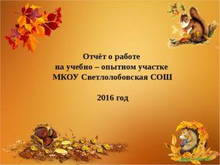 Отчёт о работе на учебно – опытном участке МКОУ Светлолобовская СОШ 2016 год
