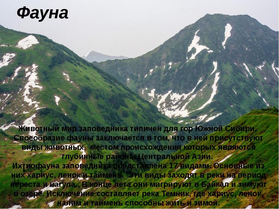 Фауна Животный мир заповедника типичен для гор Южной Сибири. Своеобразие фаун...