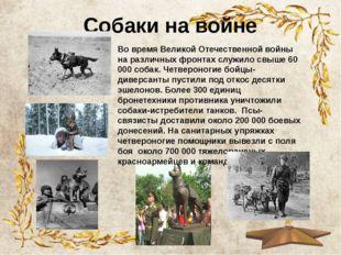 Собаки на войне Во время Великой Отечественной войны на различных фронтах слу