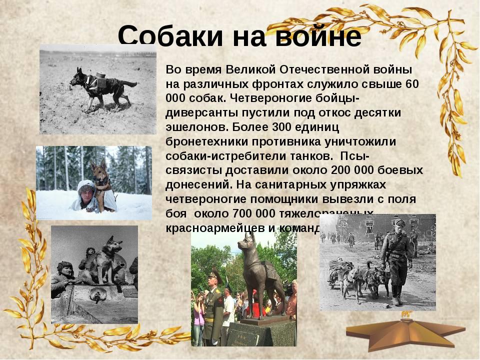 Собаки на войне Во время Великой Отечественной войны на различных фронтах слу...
