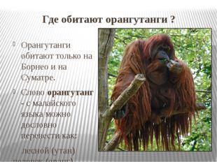 Где обитают орангутанги ? Орангутанги обитают только на Борнео и на Суматре.