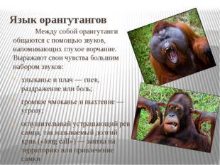 Язык орангутангов Между собой орангутанги общаются с помощью звуков, напоми