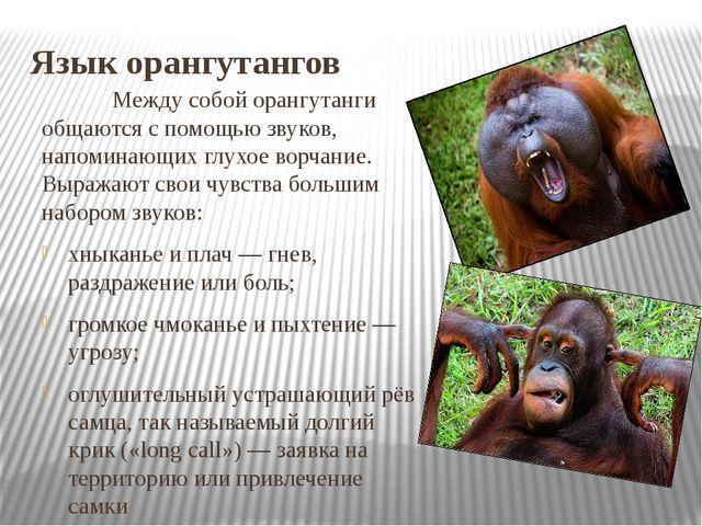 Язык орангутангов Между собой орангутанги общаются с помощью звуков, напоми...