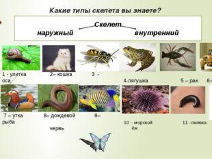 Какие типы скелета вы знаете? 1 - улитка 2– кошка 3 - оса 7 – утка 8– дождево