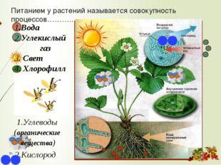 1.Вода 2.Углекислый газ 3. Свет 4. Хлорофилл 1.Углеводы (органические вещест