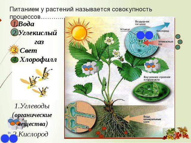 1.Вода 2.Углекислый газ 3. Свет 4. Хлорофилл 1.Углеводы (органические вещест...