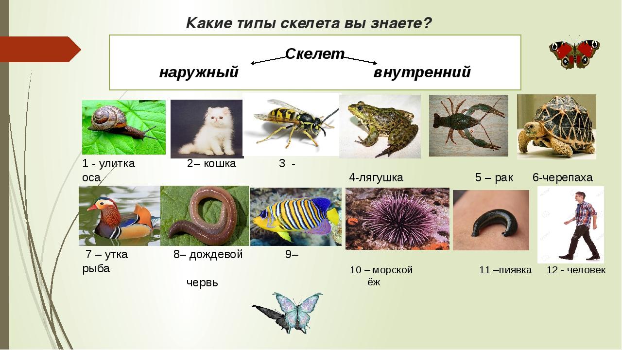 Какие типы скелета вы знаете? 1 - улитка 2– кошка 3 - оса 7 – утка 8– дождево...