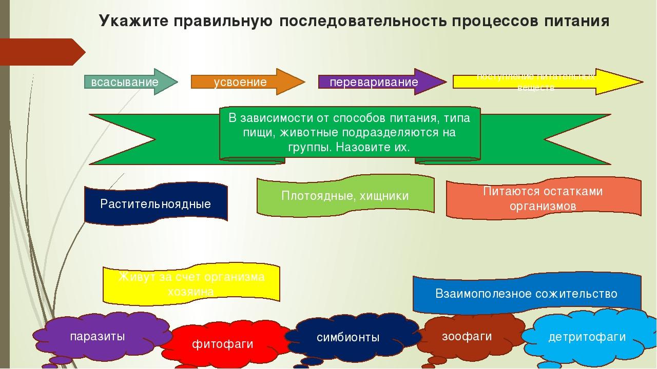 Укажите правильную последовательность процессов питания всасывание усвоение п...
