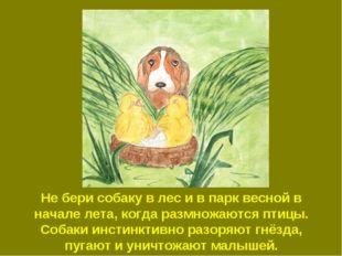 Не бери собаку в лес и в парк весной в начале лета, когда размножаются птицы.