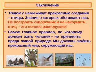 Заключение Рядом с нами живут прекрасные создания – птицы. Знания о которых о