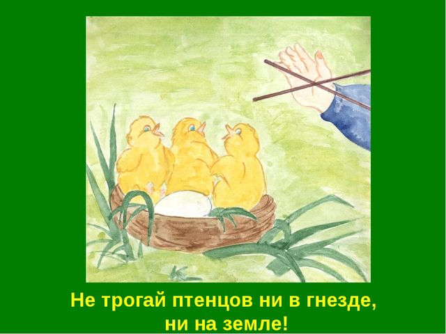 Не трогай птенцов ни в гнезде, ни на земле!