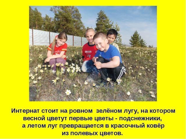 Интернат стоит на ровном зелёном лугу, на котором весной цветут первые цветы...