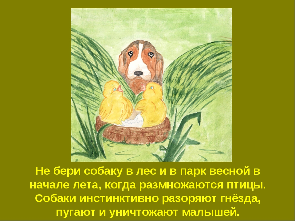 Не бери собаку в лес и в парк весной в начале лета, когда размножаются птицы....
