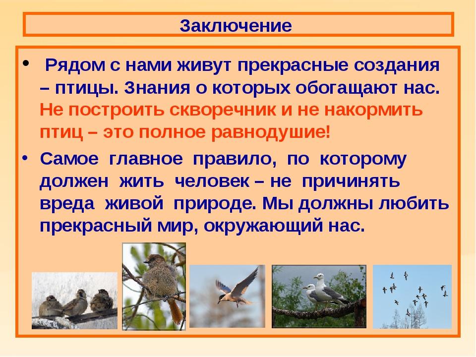 Заключение Рядом с нами живут прекрасные создания – птицы. Знания о которых о...