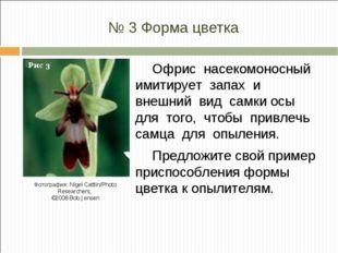 № 3 Форма цветка Офрис насекомоносный имитирует запах и внешний вид самки осы
