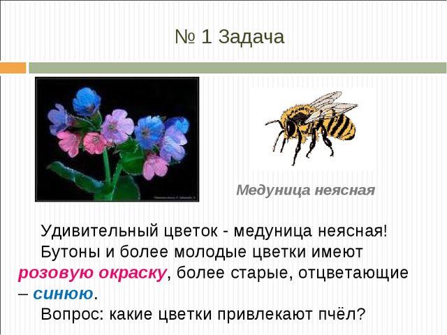 № 1 Задача Удивительный цветок - медуница неясная! Бутоны и более молодые цве...