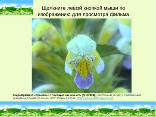 Видеофрагмент «Опыление с помощью насекомых» (N 132193) [электронный ресурс]