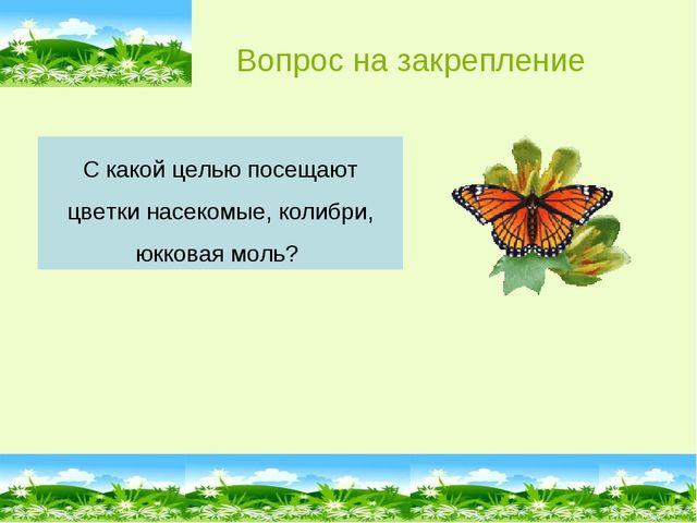 С какой целью посещают цветки насекомые, колибри, юкковая моль? Вопрос на зак...