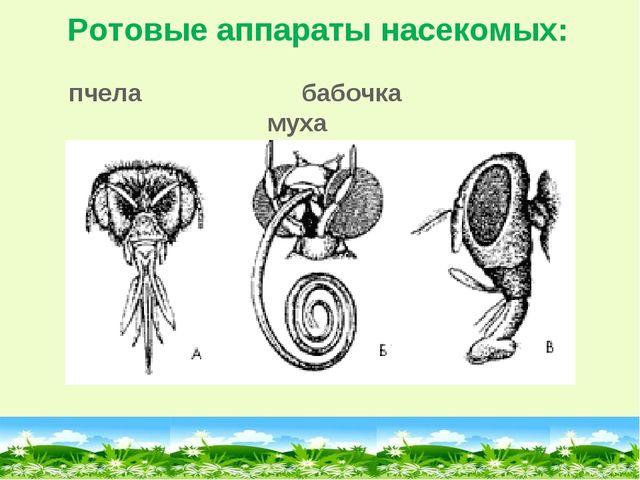 Ротовые аппараты насекомых: пчела бабочка муха
