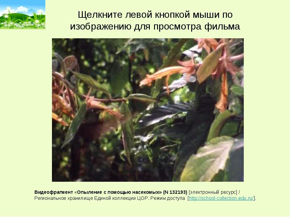 Видеофрагмент «Опыление с помощью насекомых» (N 132193) [электронный ресурс]...
