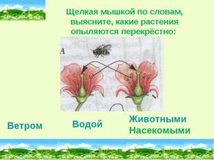 Ветром Водой Животными Насекомыми Щелкая мышкой по словам, выясните, какие ра