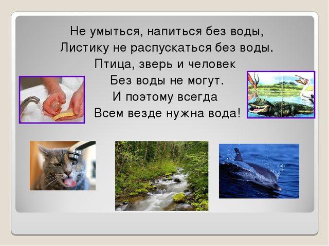 Не умыться, напиться без воды, Листику не распускаться без воды. Птица, зверь...