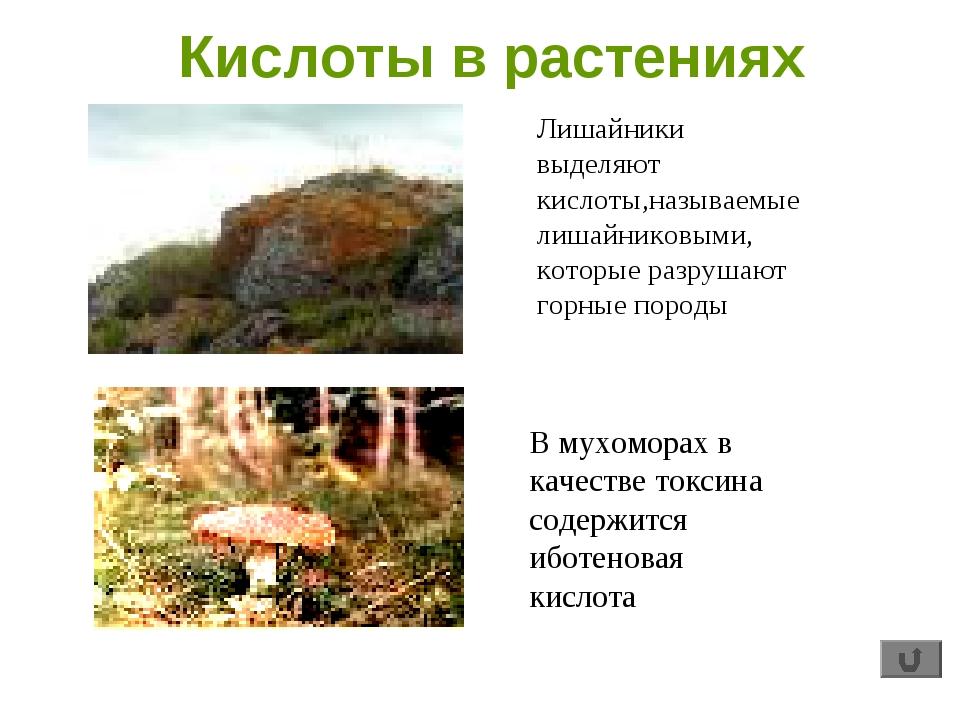 Кислоты в растениях Лишайники выделяют кислоты,называемые лишайниковыми, кото...