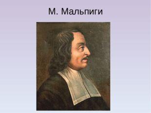 М. Мальпиги