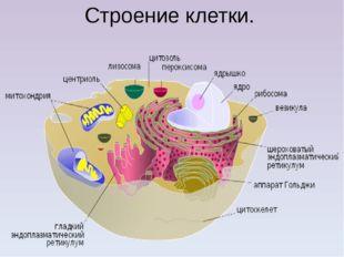 Строение клетки.