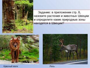 Задание: в приложении стр. 8, назовите растения и животных Швеции и определи