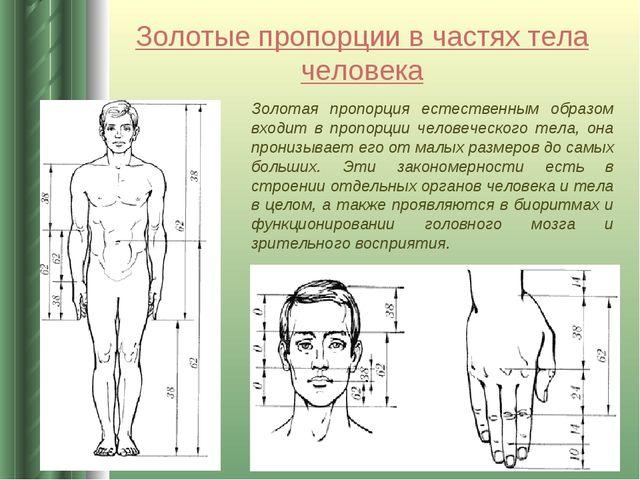 Золотые пропорции в частях тела человека Золотая пропорция естественным образ...