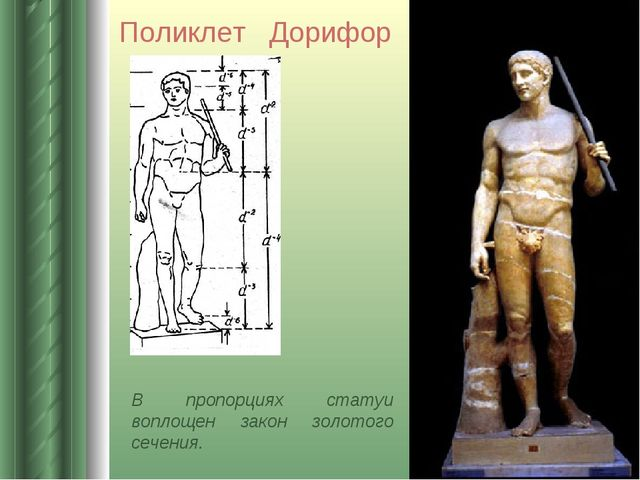В пропорциях статуи воплощен закон золотого сечения. Поликлет Дорифор