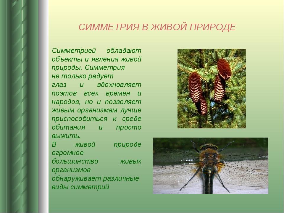 СИММЕТРИЯ В ЖИВОЙ ПРИРОДЕ Симметрией обладают объекты и явления живой природы...