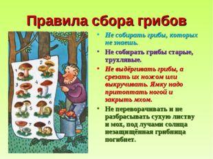 Правила сбора грибов Не собирать грибы, которых не знаешь. Не собирать грибы