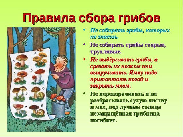 Правила сбора грибов Не собирать грибы, которых не знаешь. Не собирать грибы...