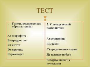 ТЕСТ Гаметы папоротника образуются на: А) спорофите В) предростке С) зиготе D